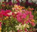 Marina_Flowers