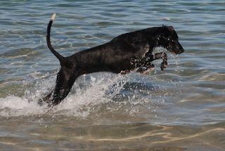 Jessie chasing Fish