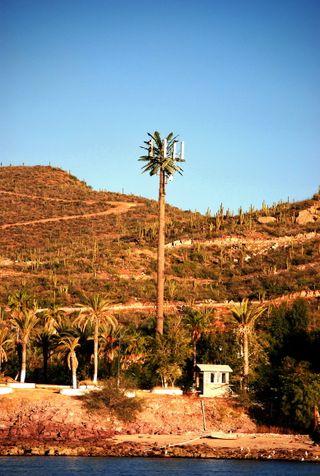 A Palm Tree?