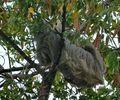 Sloth Acrobatics