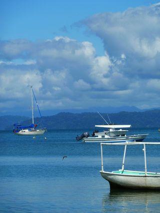 Curare at Puerto Jiminez