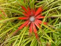 Tropical vegetation - or is it