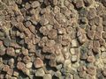 Columnar basalts_lying down
