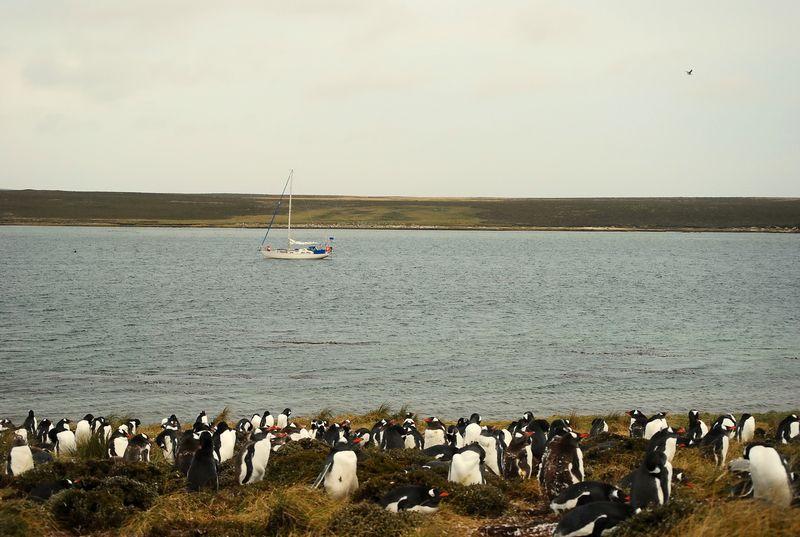 Falkland Islands_2013