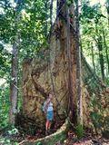 Large trees