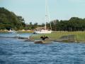 Cormorant at Hadley Harbor