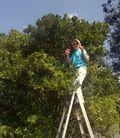 Kelly picking mandarin oranges