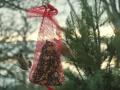 Annas Humminbird blurry