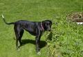 Jessie in Her Garden April 2002