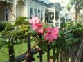 Flowers of Charleston