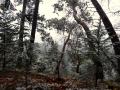 Start of November snow