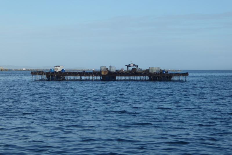 Mussel Raft
