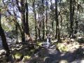 Trekking in the forest