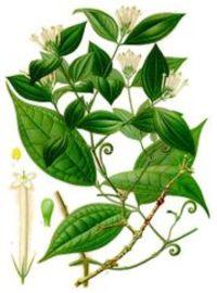 The Curare plant