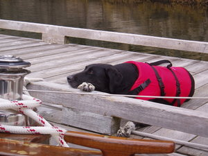Jessie and her lifejacket