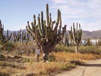 Linda_and_cactus
