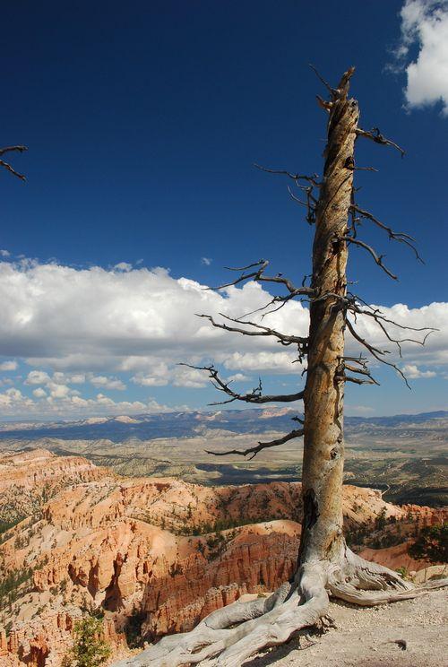 Bryce_Canyon2D