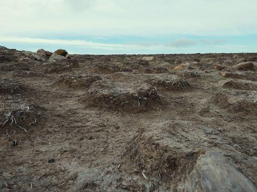 Empty Rockhopper penguin Nests