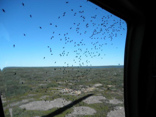 Black flies inside the chopper